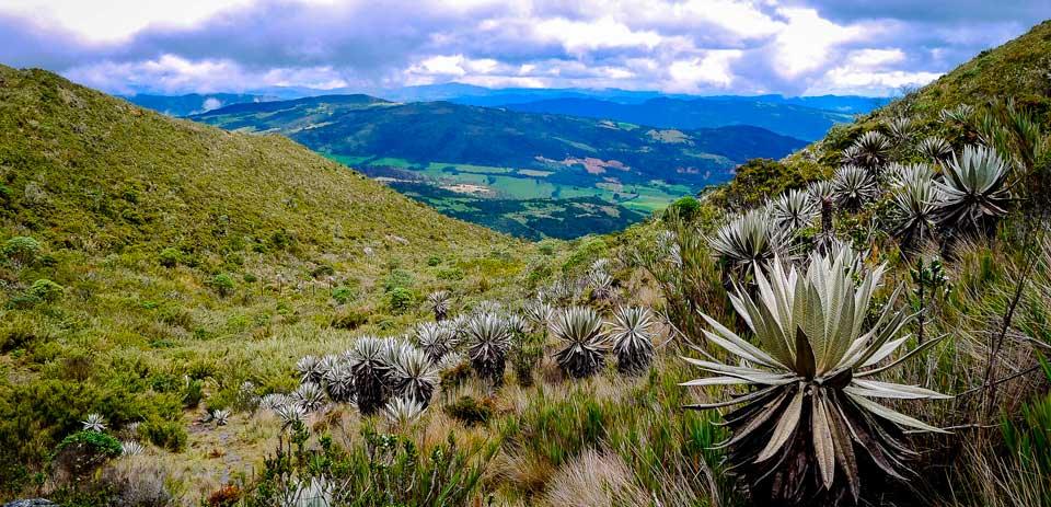 Parque Nacional Natural Chingaza Montes Colombia